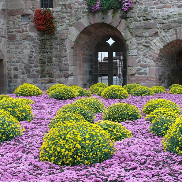 Tagesfahrt-2020 Chrysanthema