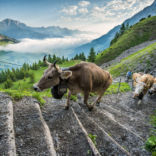 Halbtagesfahrt-2020 Adelboden-Geils